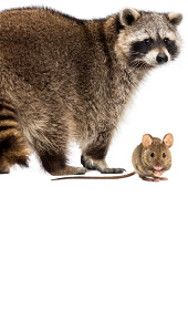 Pest & Rodent Control